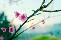 Картинка flower, sakura, bokeh, spring