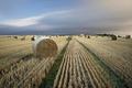 Картинка сено, поле, пейзаж