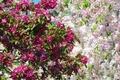 Картинка Flowering trees, деревья, blossom, весна, цветение