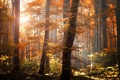 Картинка свет, оранжевые, природа, деревья, листья, листва, желтые, осень, лес