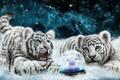 Картинка тигрята, лошадь, символы, овечка, ожидание