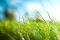 Картинка Трава, зеленый, листья