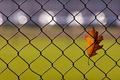 Картинка блики, осенний, лист, забор, дубовый