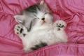 Картинка котенок, Розовый