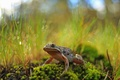 Картинка лягушка, фон, природа