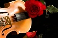Картинка музыка, скрипка, роза, красная