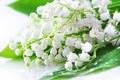 Картинка капли, цветы, роса, букет, весна, белые, ландыши, ландыш