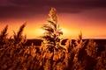 Картинка лето, трава, ночь