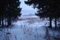 Картинка деревья, снег, Зима