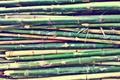 Картинка smooth, bamboo, texture, green