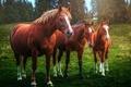 Картинка кони, фон, природа