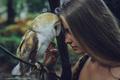 Картинка девушка, сова, дружба, питомец