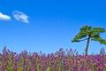 Картинка tree, sunny, sky, clouds, flowers, flowers field