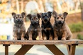 Картинка скамья, собаки, щенки
