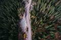 Картинка деревья.дорога, вид сверху, лес, камни, природа
