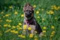 Картинка собака, цветы, щенок, одуванчики, луг, Немецкая овчарка