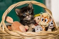 Картинка игрушки, корзина, котёнок