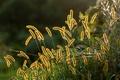 Картинка лето, макро, трава, природа