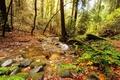 Картинка листва, зелень, лес, ручей, деревья, камни