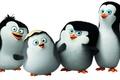 Картинка Classified, пингвины Мадагаскара, Penguins of Madagascar, мультфильм