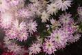 Картинка растение, цветок, цветы