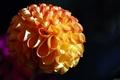 Картинка Ribbon Flower, макро, цветок