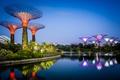 Картинка дизайн, сады, Сингапур, вода, вечер, огни, Gardens by the Bay, залив, кусты, деревья, отражение