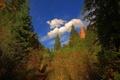 Картинка Деревья, облака, тропа, зеленый, лето