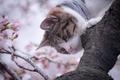 Картинка кошка, дерево, весна