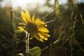 Картинка лепестки, цветок, желтые