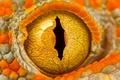 Картинка газ, зрачок, геккон, оранжевый