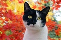 Картинка Кот, мордочка, пятна