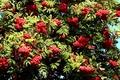 Картинка куст, Рябина, осень, ягода