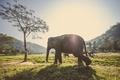 Картинка животные, слоны, лучи, деревья, стадо, отблик, трава, лес