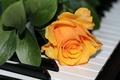 Картинка музыка, пианино, роза
