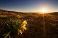 Картинка цветы, утро, свет