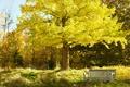 Картинка осень, небо, деревья, парк, сад, скамья