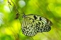 Картинка блики, фон, бабочка, Травинка