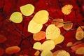 Картинка Windows 7, seven, красный, листья, осень