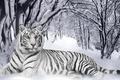 Картинка Лес, Кошки, Зима