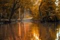 Картинка foresy, leaves, Природа, fall, lake, autumn, path, тропа, листва, озеро, осень, nature, лес