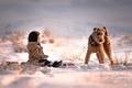 Картинка снег, собака, мальчик, друзья, Sled Dog
