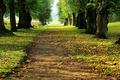 Картинка Аллея, трава, листья, перспектива