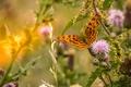 Картинка трава, макро, бабочка