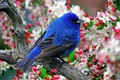 Картинка Птичка, цветы, перья