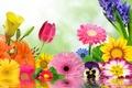 Картинка цветы, flowers, spring, цветение, blossom, reflection, colorful, water