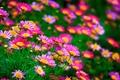 Картинка трава, лепестки, поле, луг, природа