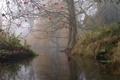 Картинка дерево, туман, Англия, осень, река