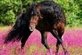Картинка цветы, конь, танец, природа