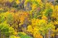 Картинка осень, лес, листья, деревья, краски, склон, роща, осина